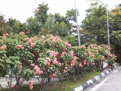 Malaysia15.jpg